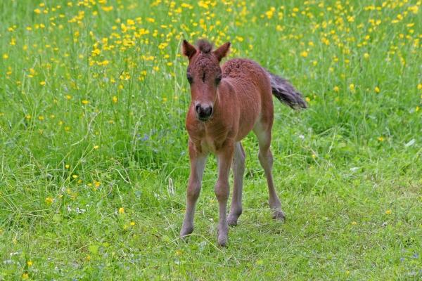 gambe piantare seminare cavallo animale curiosita