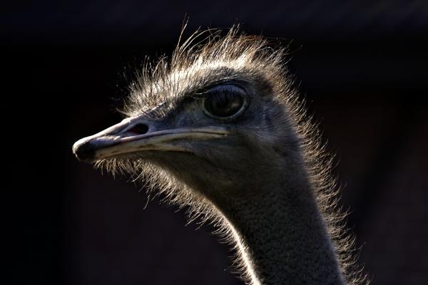 luce uccello marrone occhio organo uccelli