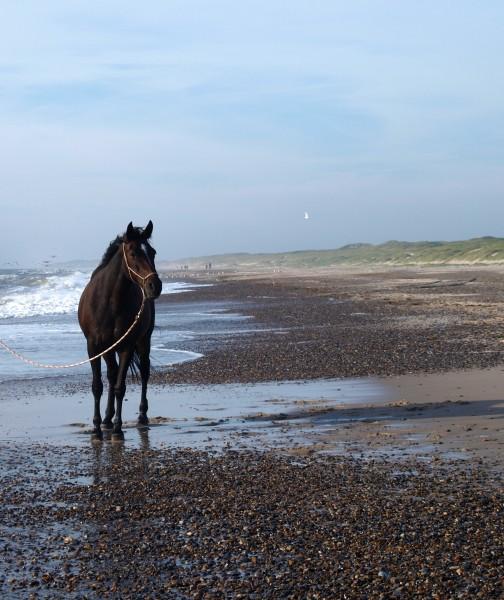 marrone bocca cavallo stallone cavalla equitazione