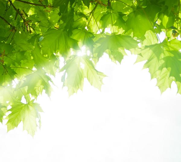 luce albero acero lascia