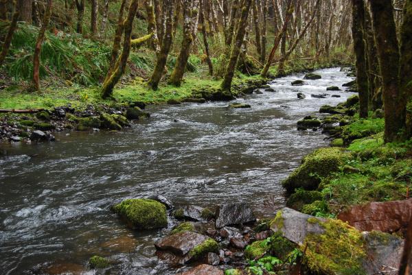 albero torrente paesaggio natura flusso foresta