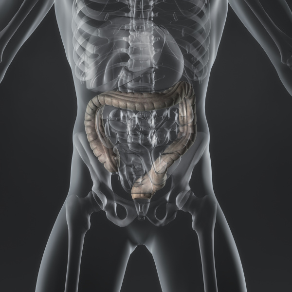 intestino crasso
