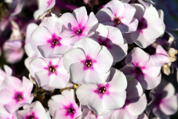 primo piano close up giardino fiore