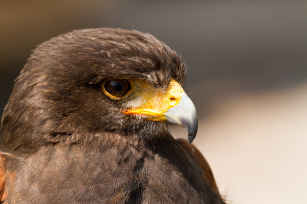 eagle without pose without position