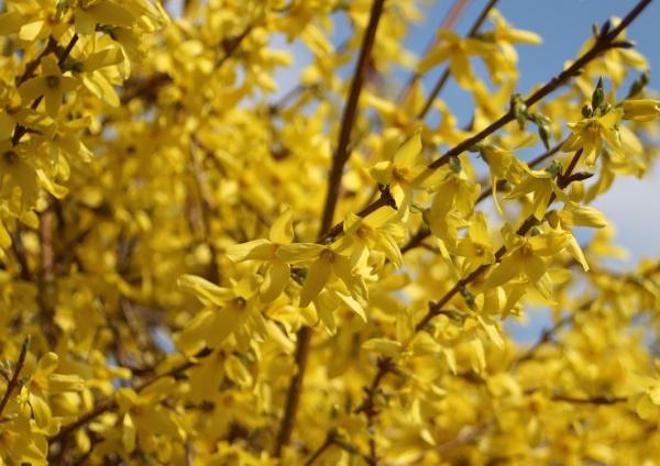 blu albero parco giardino fiore pianta
