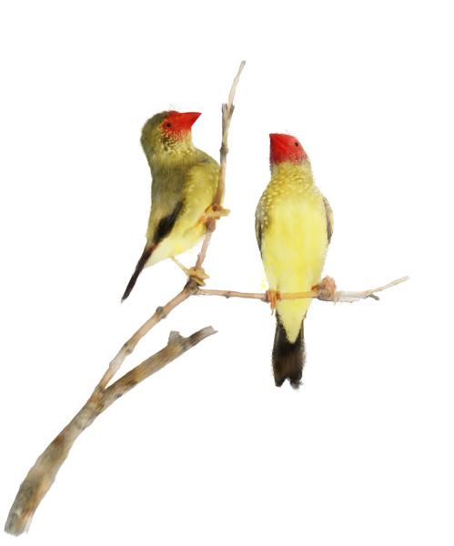 arte animale animale domestico uccello pittura