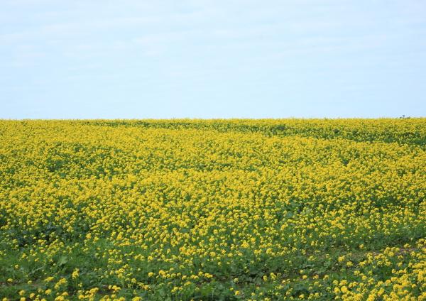 blu colore fiore pianta verde agricoltura