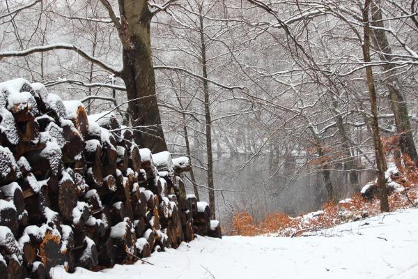sentimenti emozioni inverno quiete silenzio tranquillita