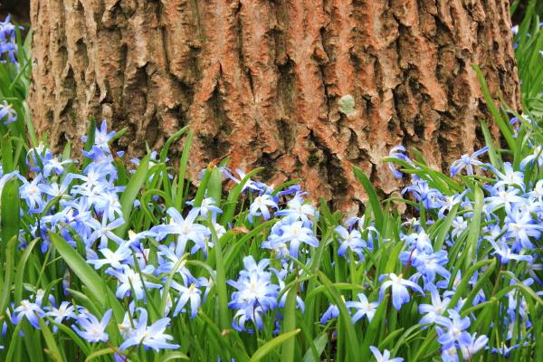 blu fiore pianta primavera allaperto stagione