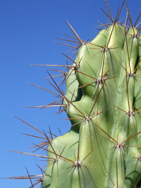 deserto verde maiorca aculeo cactus pungiglione