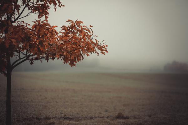 albero suolo terra terreno fauna foglie