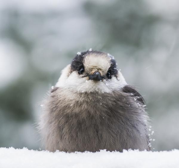 primo piano close up inverno uccello