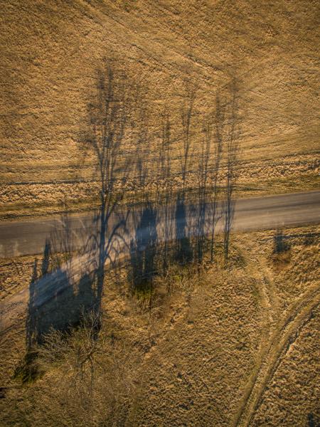 vista aerea degli alberi ombra al