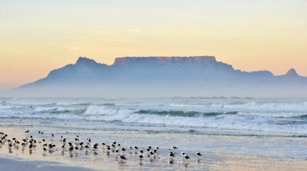 paesaggio, con, gabbiani, sulla, spiaggia, e - 28215159
