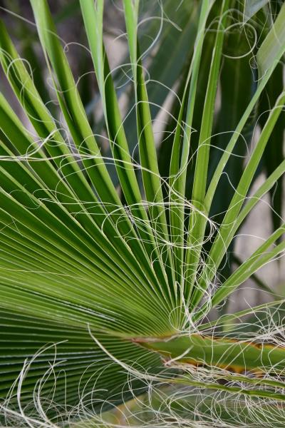 foglie, di, palma, nella, provincia, di - 28217255