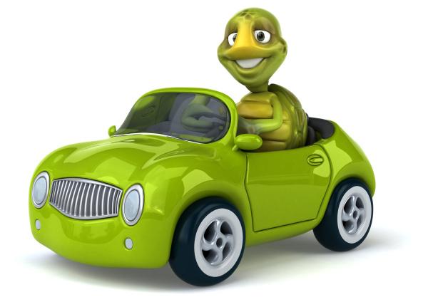 tartaruga, divertente - 28218090