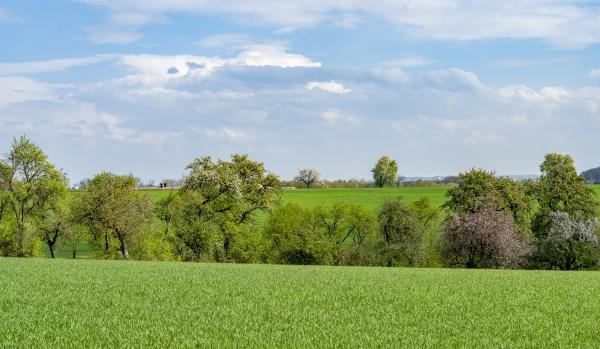 paesaggio rurale idilliaco