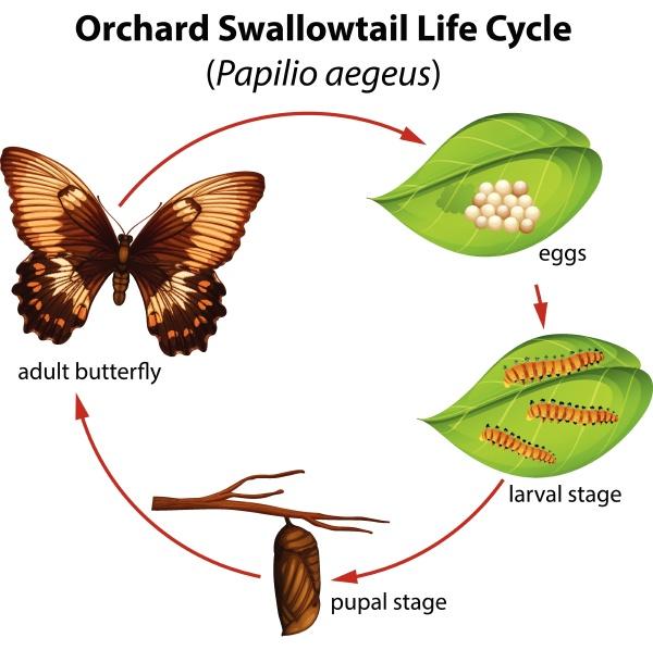 ciclo di vita della coda di