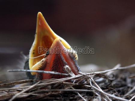 uccello fame uccelli ramo becco nido