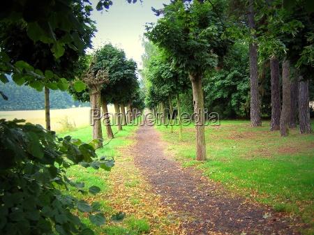 albero alberi acero viale via prato