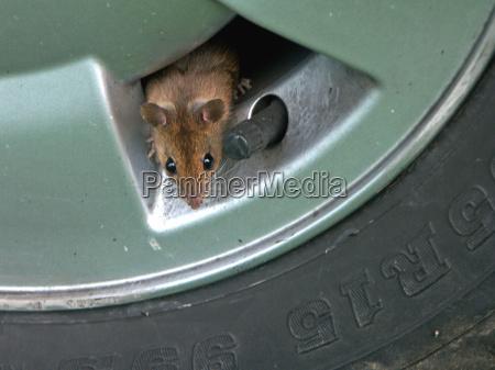 evviva una nuova tana del topo