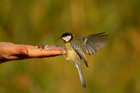 arriva un uccello