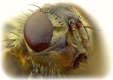 primo piano close up dettaglio insetto