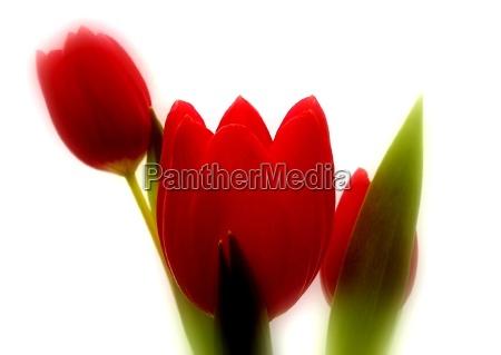 natura morta luce opzionale fiore verde