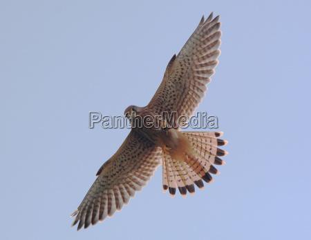 visione dal basso volo uccello animali