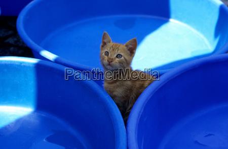 blu animale cucciolo bambino junior plastica