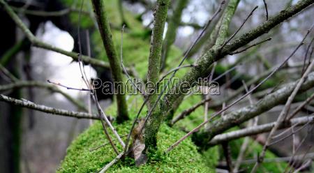 albero alberi inverno verde legno rami