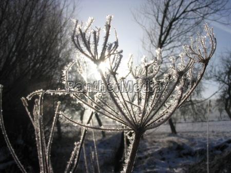 inverno gelo controluce brina prato erba