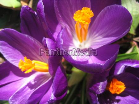 primo piano close up giardino primavera