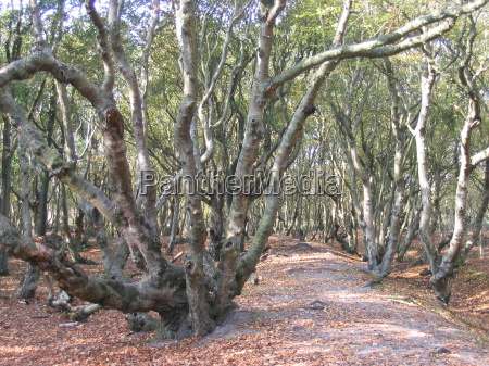 albero alberi rami groviglio da solo
