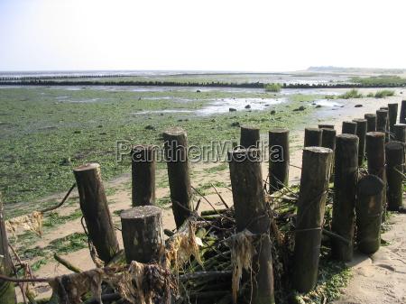 riva del mare spiaggia alga marina