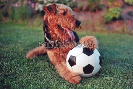 gioco giocato giocare palla cane coppa
