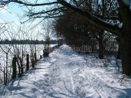 inverno freddo profondo profondita cespugli recinto