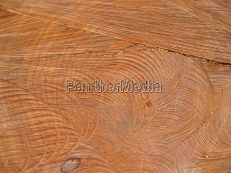 legno tronco anello annuale deforestazione legnoso