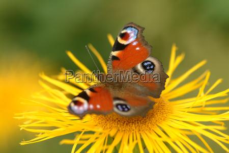 blu bello bella esistere insetto fiore