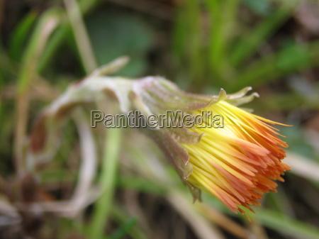 fiore fioritura primavera fuori risveglio ciglio