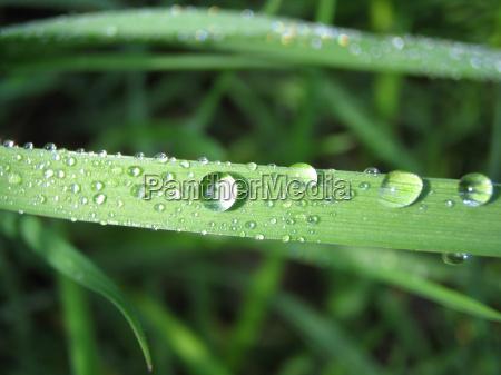 foglia verde goccia di pioggia riflesso
