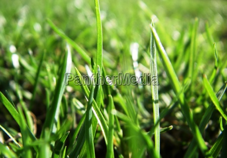 grass no verde 1