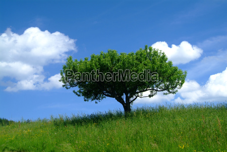 albero con cielo 1