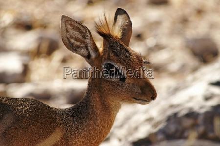 parco nazionale africa namibia occhio organo