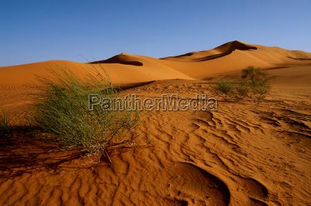 deserto verde africa libia sera arbusto