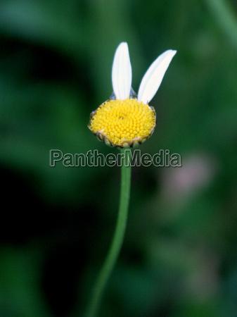 segnale simbolico fiore verde fioritura sfacciato