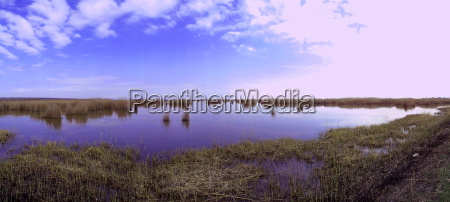 lake landscape with grass in purple