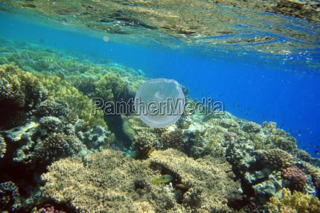 ambiente acque africa animali egitto acqua