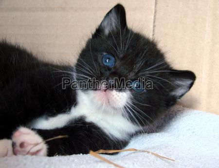 ritratto nero occhi caucasico bianco azzurro
