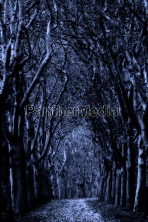 viale mistico